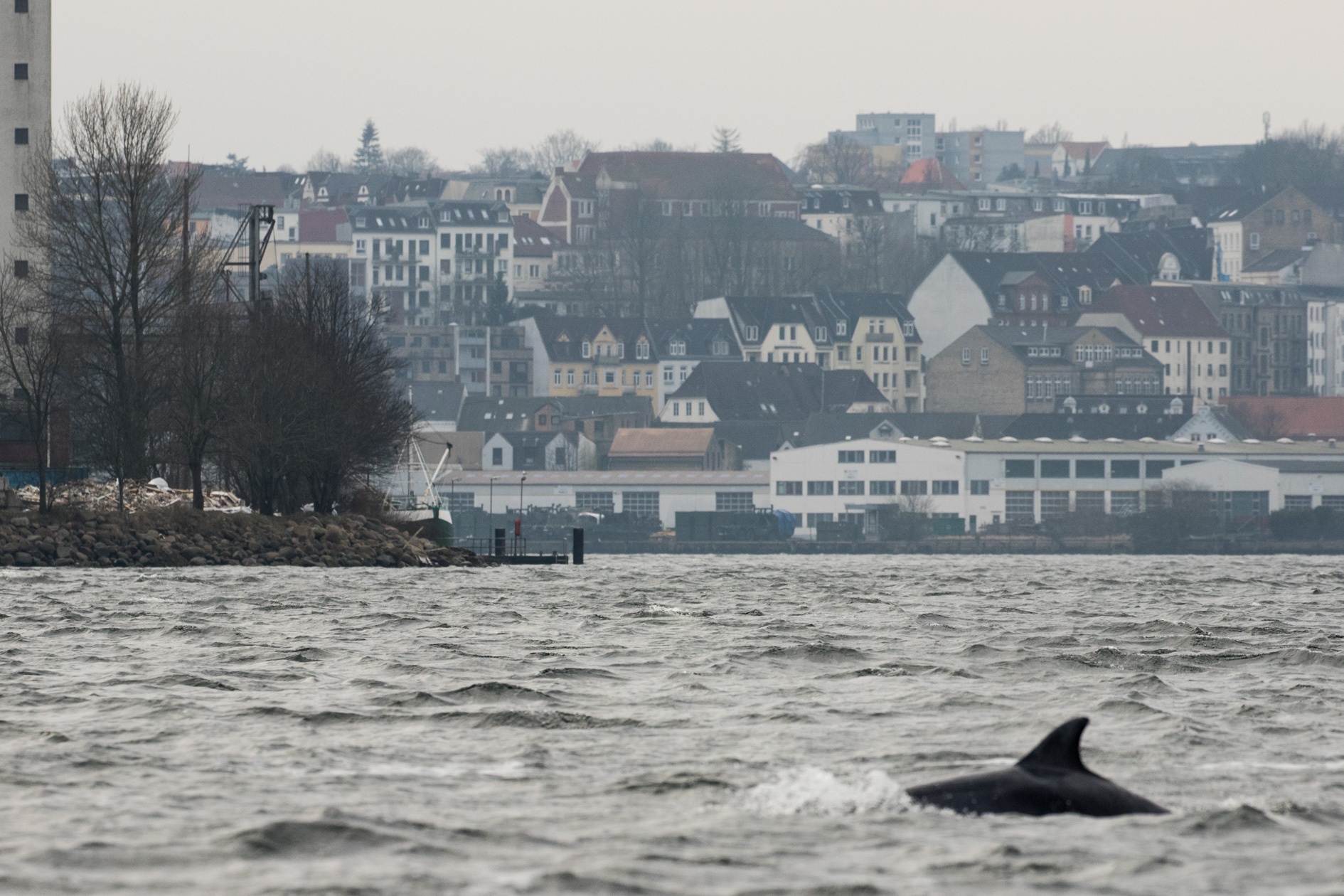 Delfine in Flensburg