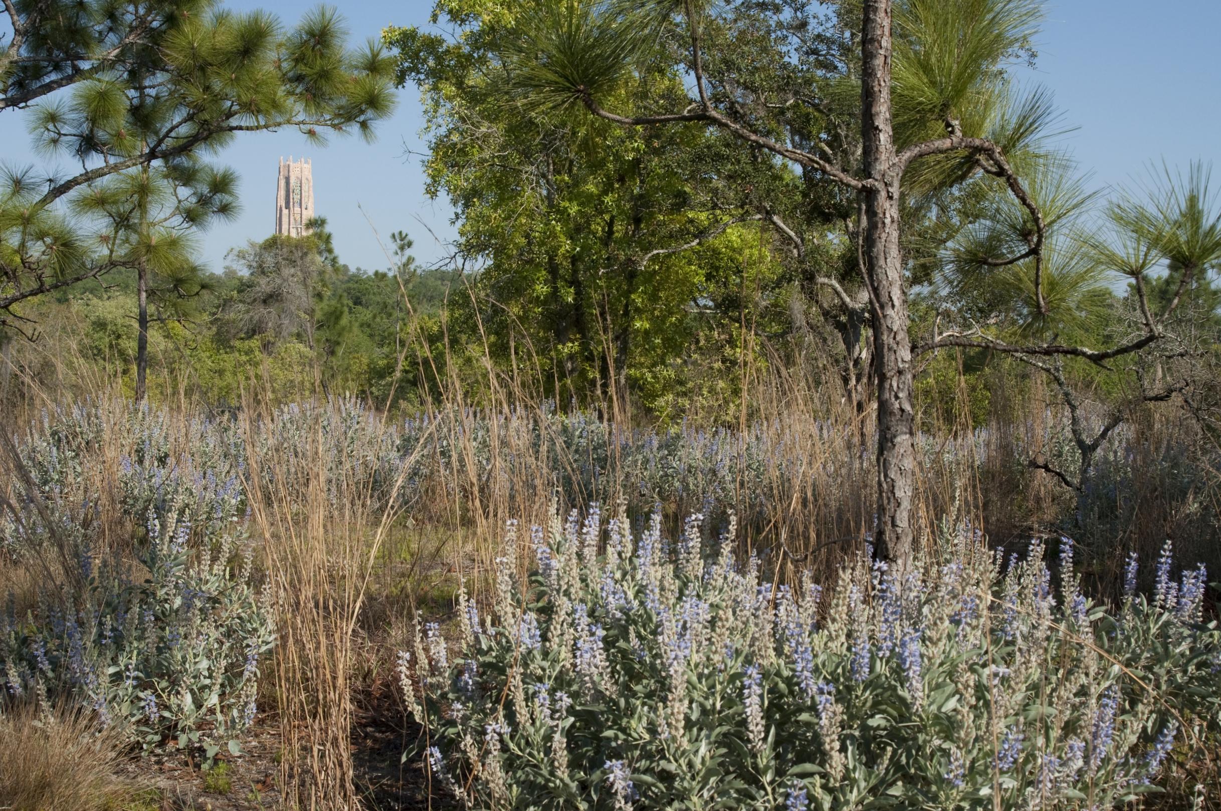 BOK Tower Gardens Master Plan