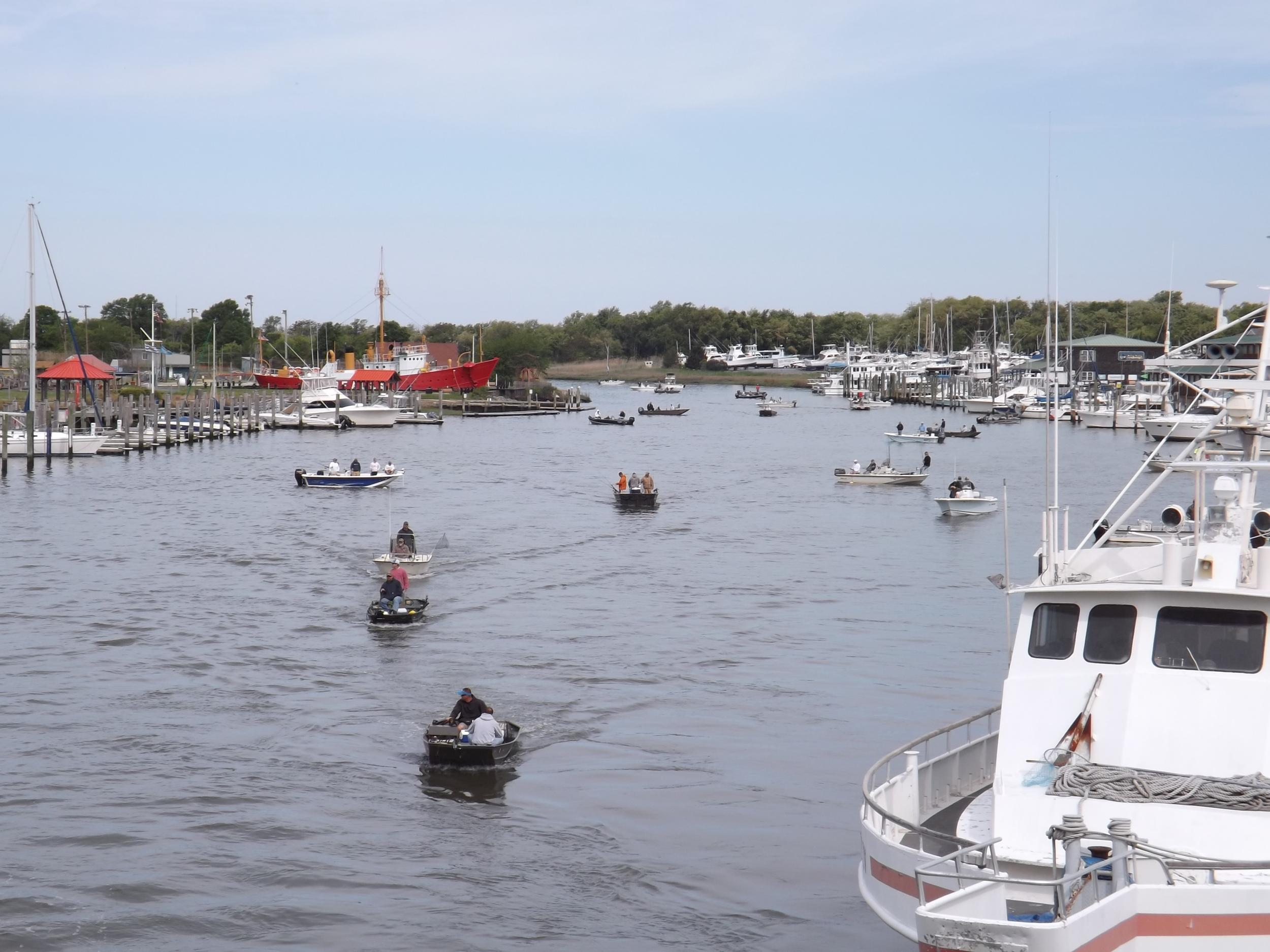 2015 Canal Flounder Tournament.jpg