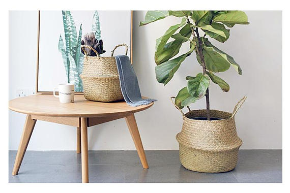Instead of a bouquet this year, how about tree in a great  basket  that you can enjoy year round?