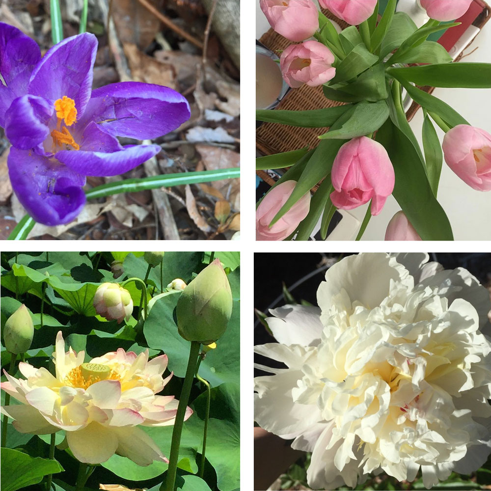 contemporary romance author camden leigh loves flowers