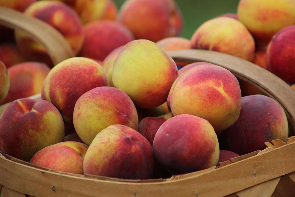 author camden leigh loves peaches
