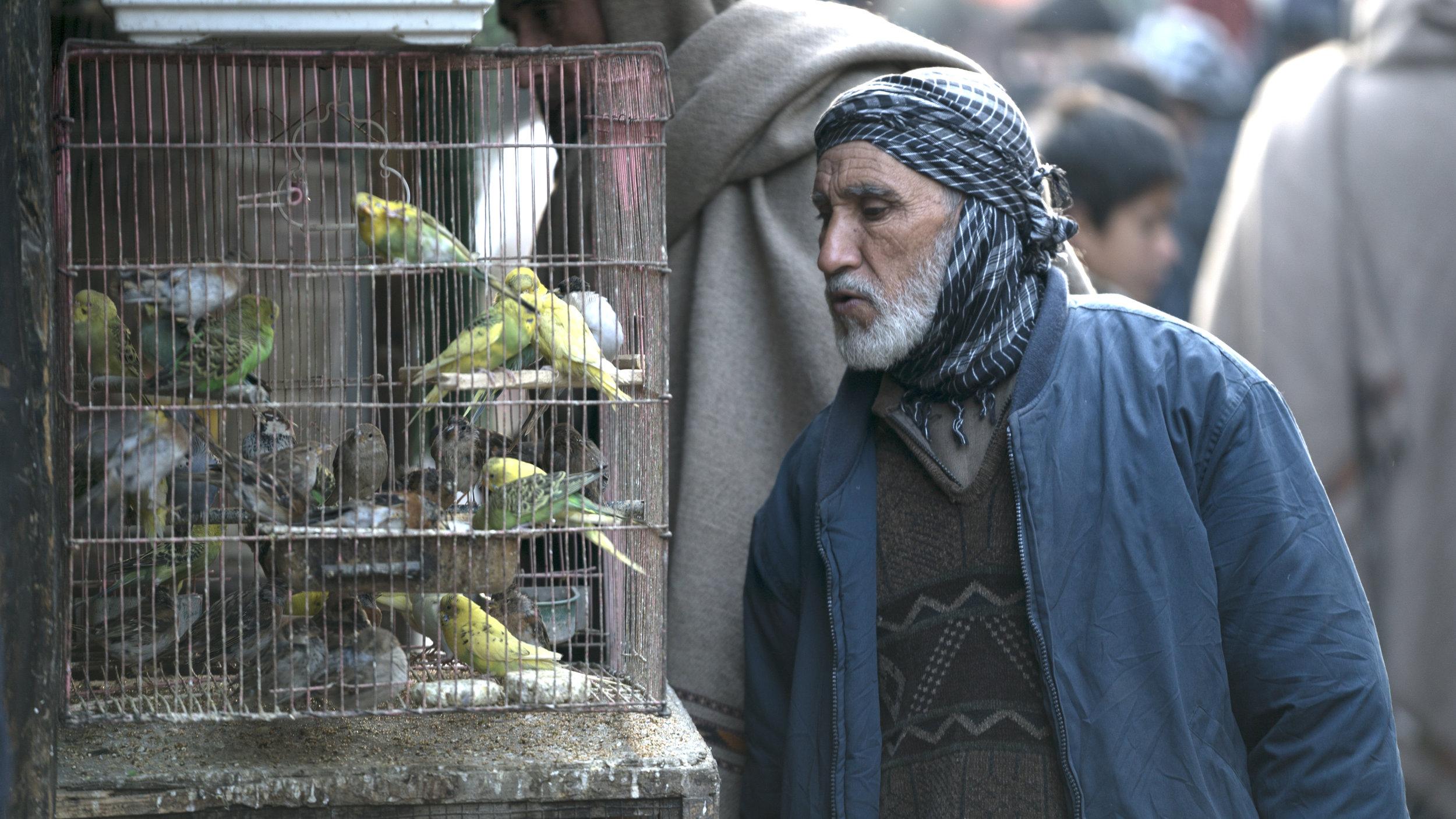 Bird Man of Kabul3.jpg