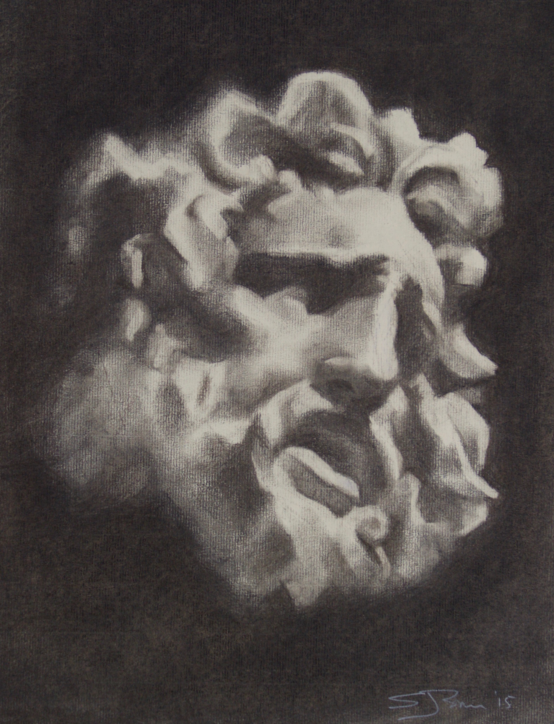 Laocoon   Charcoal on paper