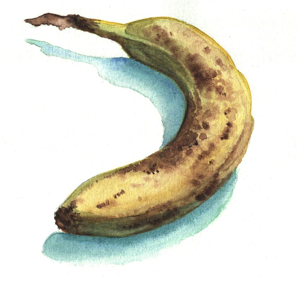 Banana   Watercolour on paper
