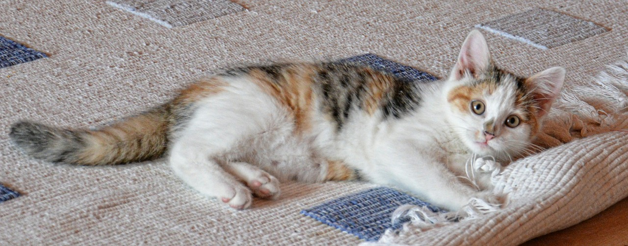 cat-535011_1280.jpg