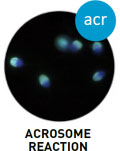 sca_system_acrosome_reaction_logo copy.jpg
