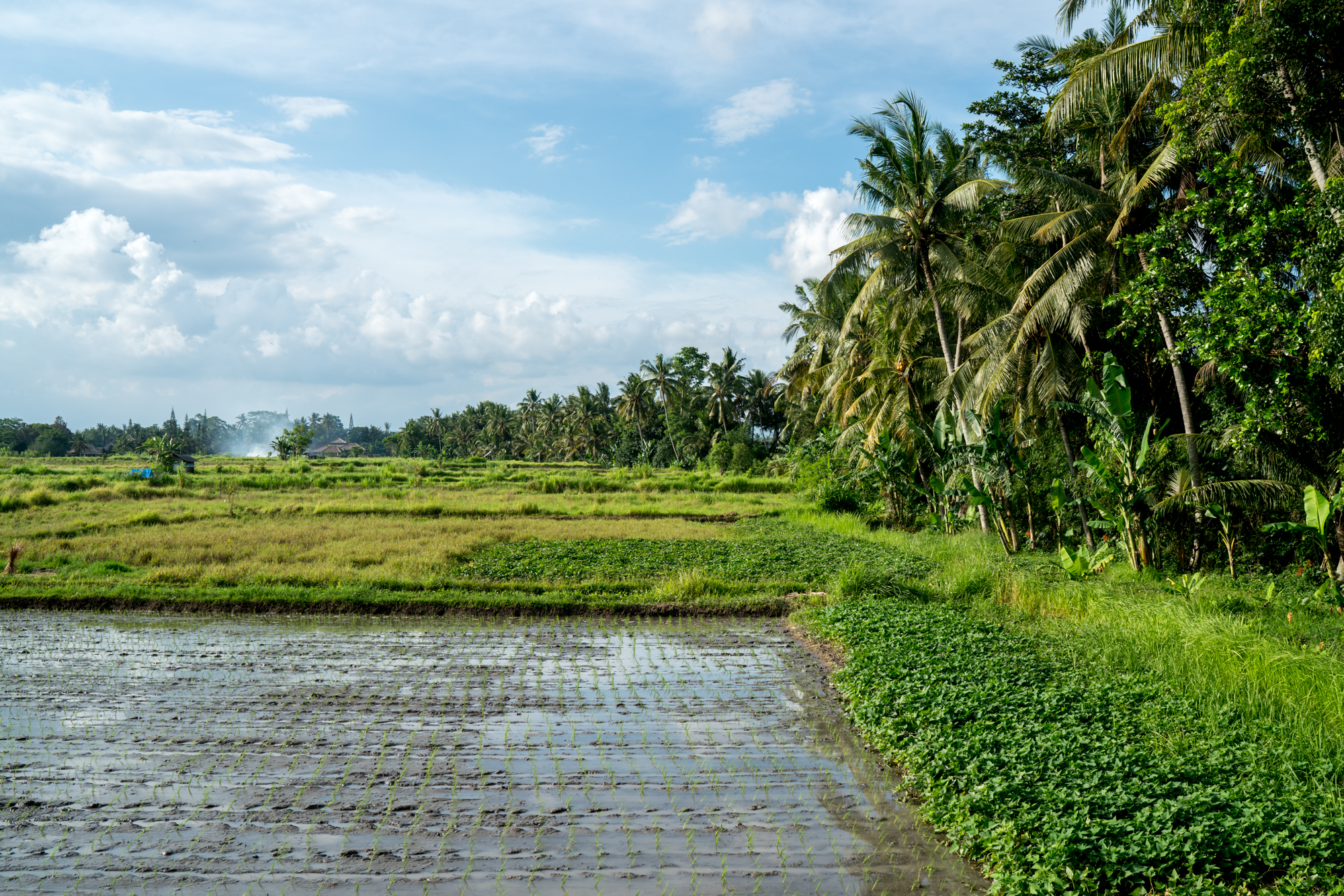 Bali Rice Fields | Never Settle Travel