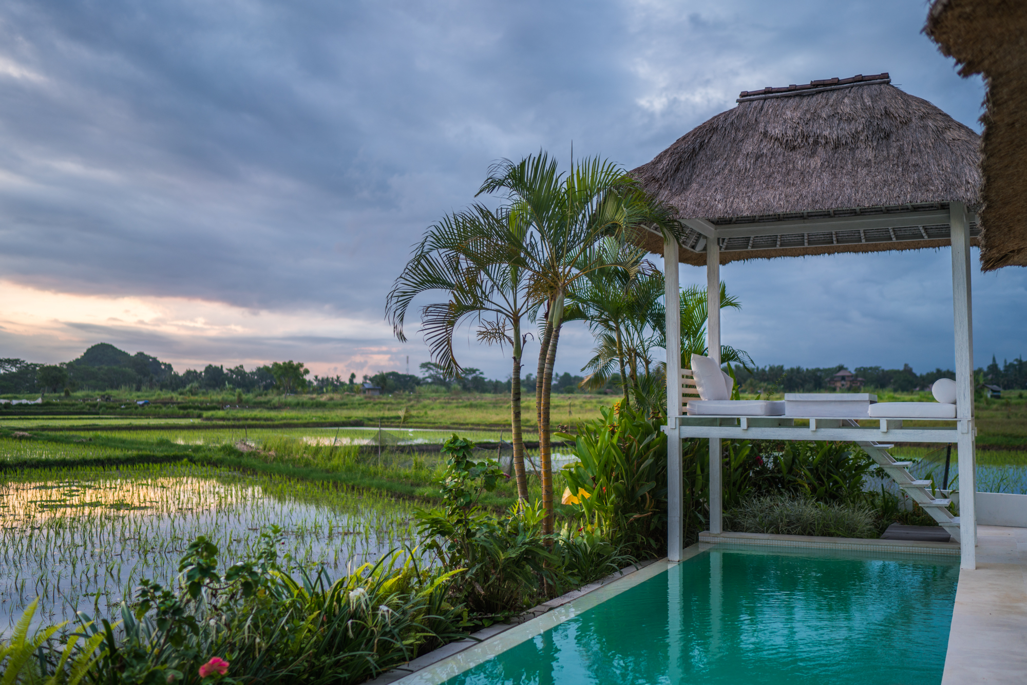 Ubud Rice Fields | Never Settle Travel