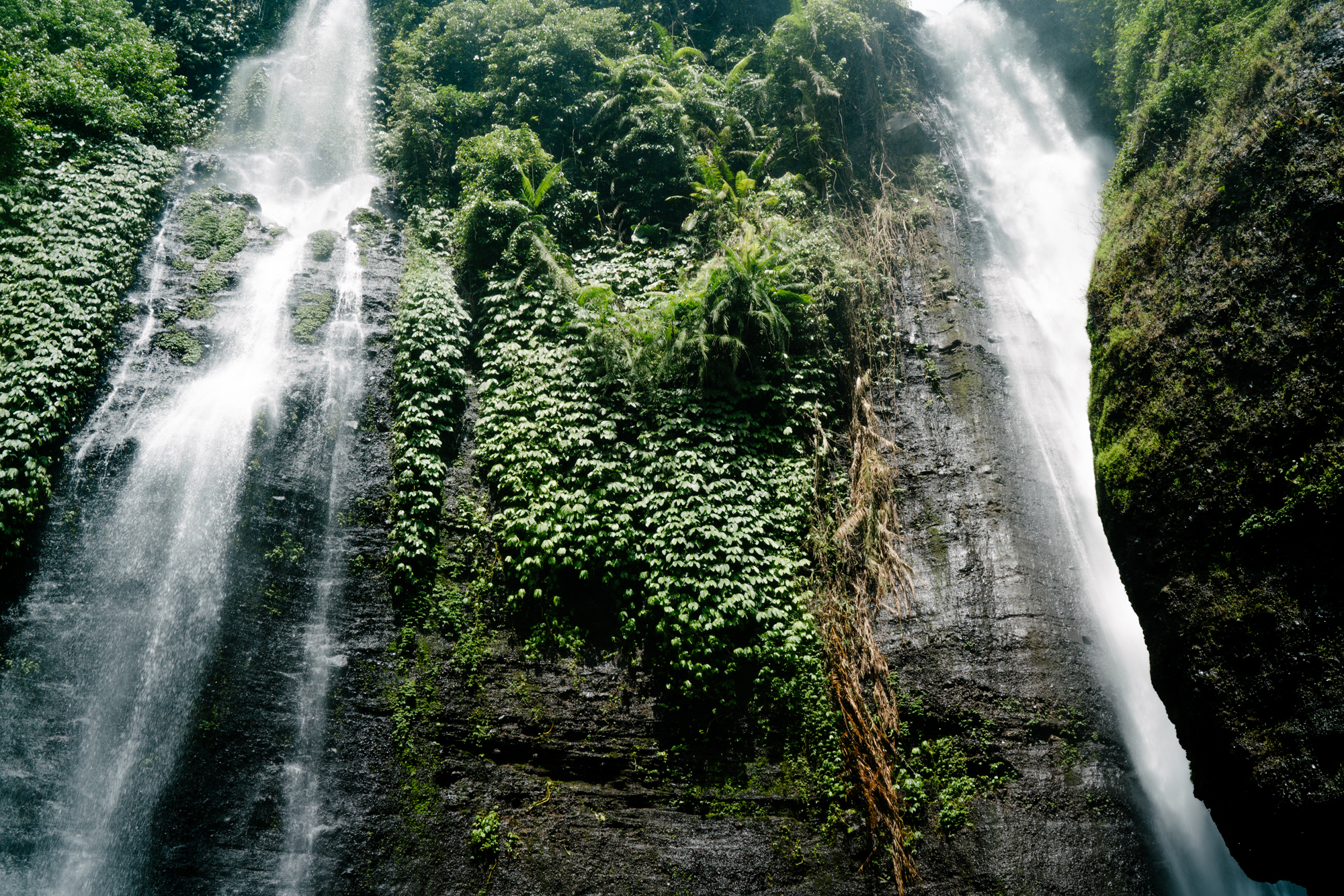 Jungle views in Bali | Never Settle Travel