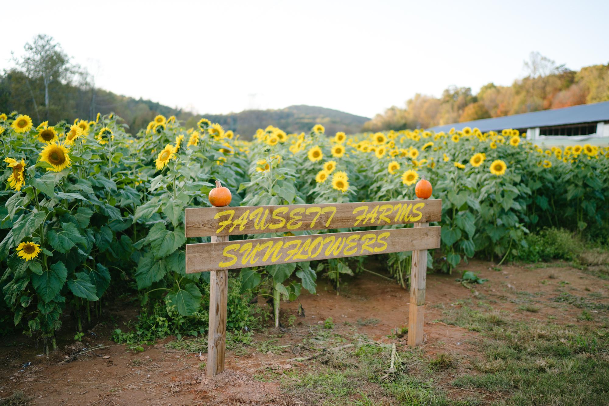 Fausett Farms Sunflowers   Never Settle Travel