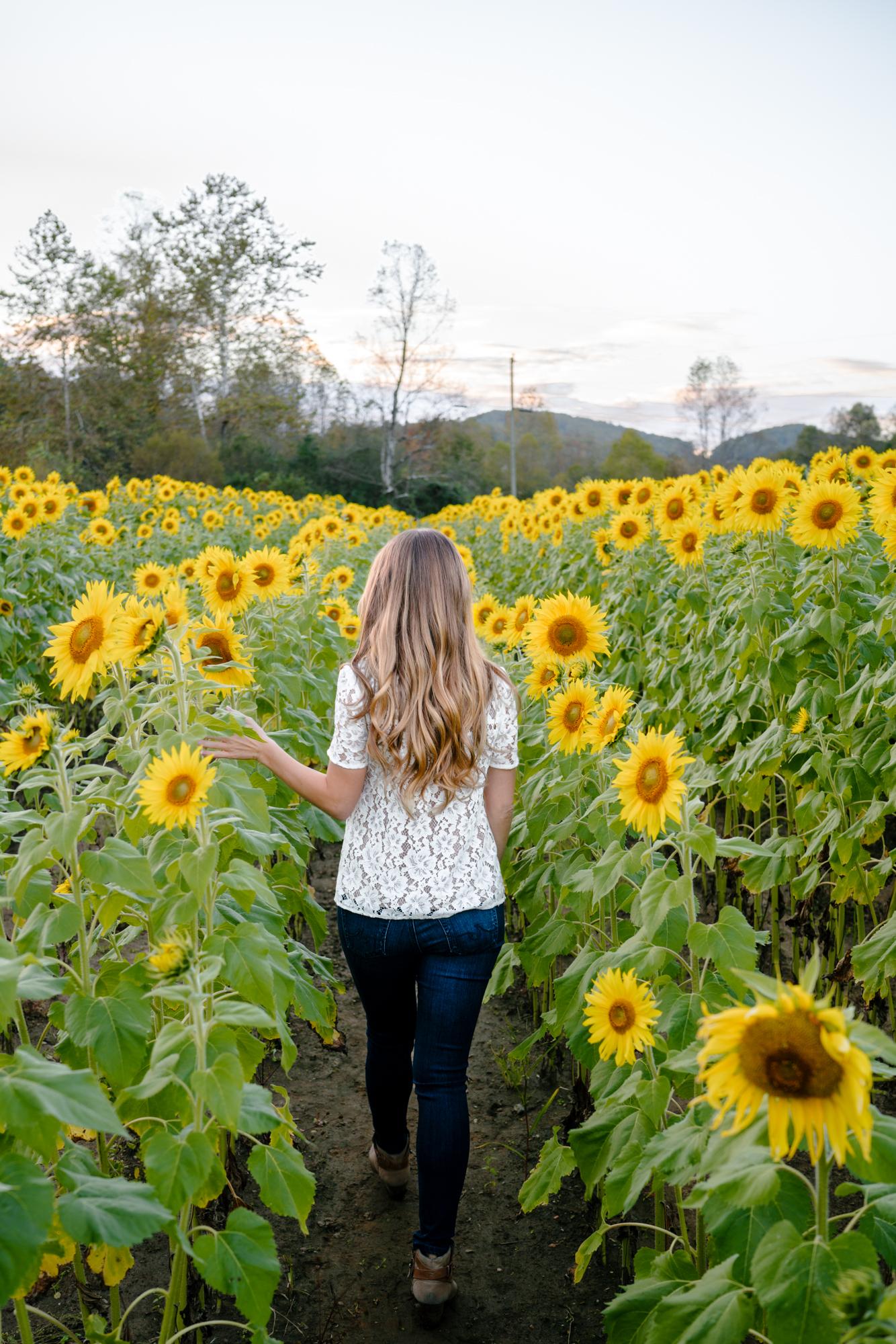 Sunflower field photography   Never Settle Travel