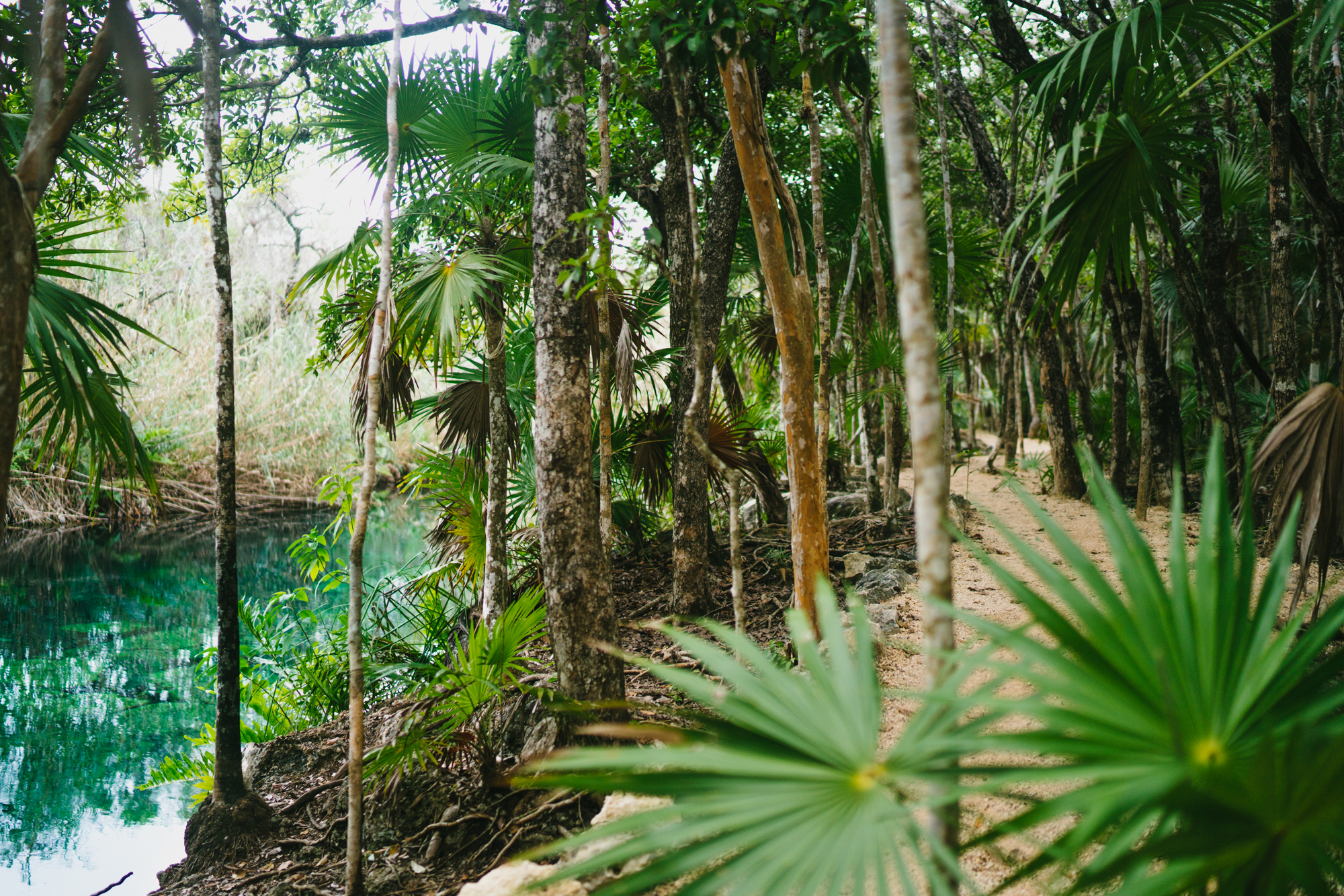 Cenote Escondido Path