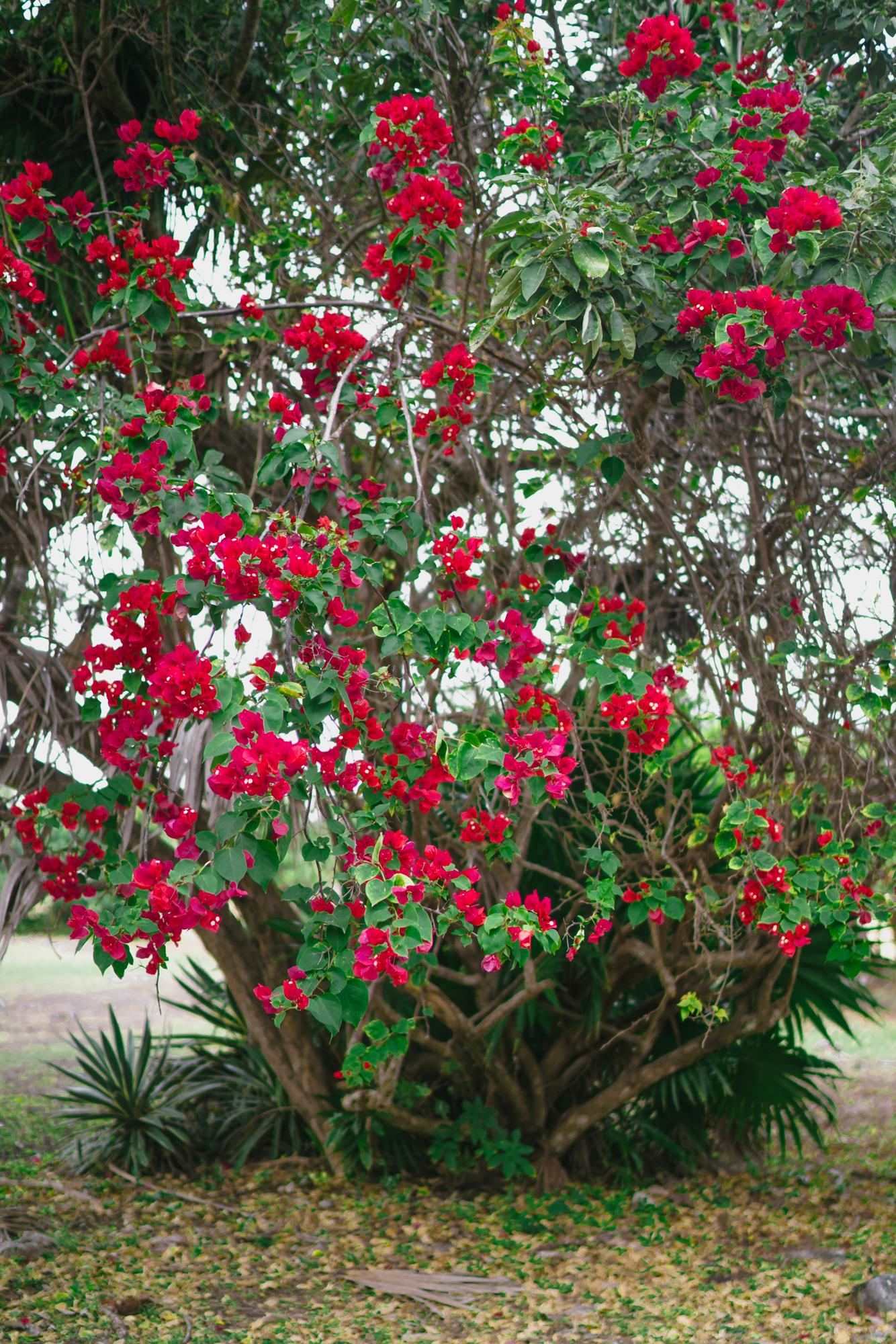 Tulum flowers