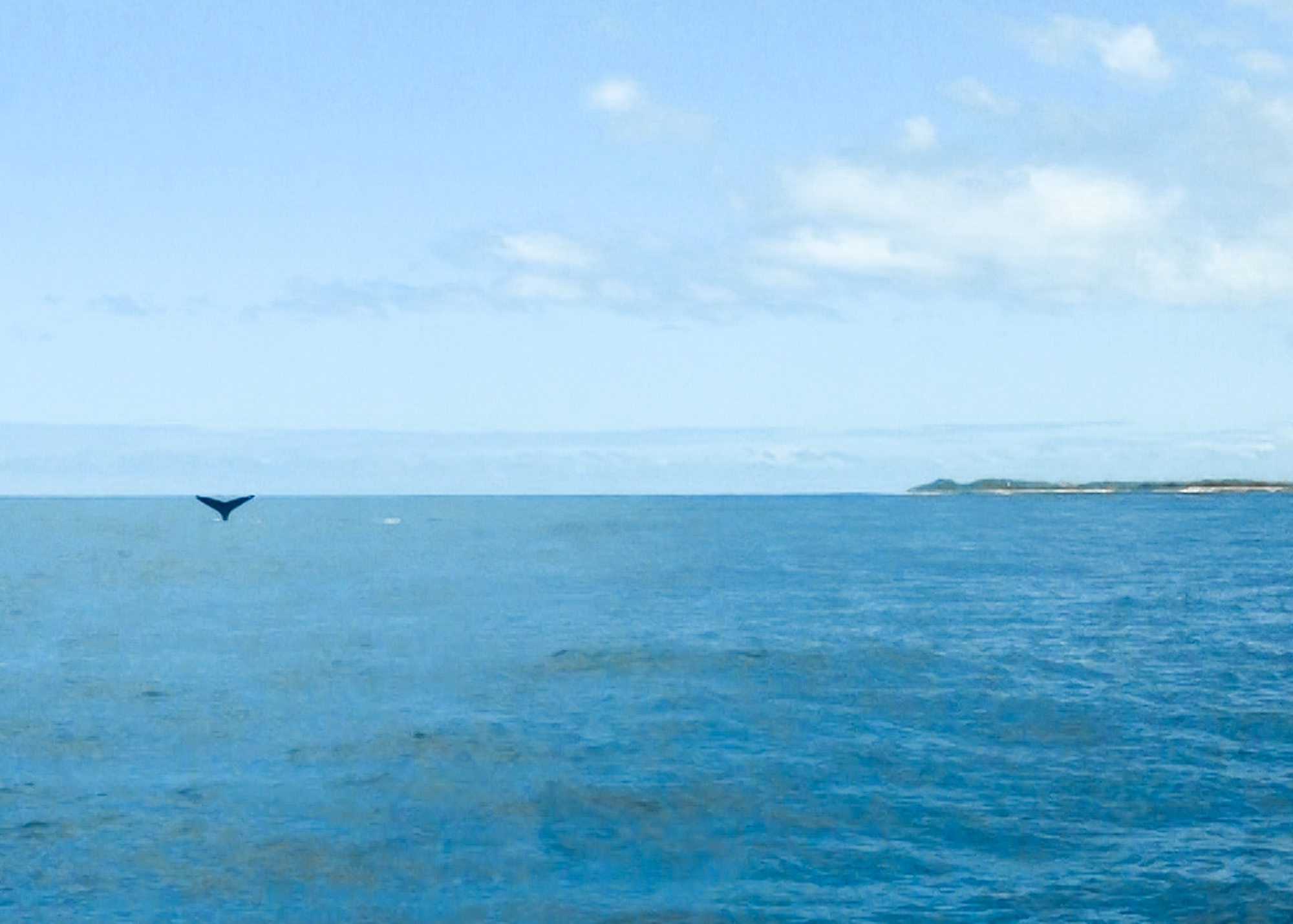 Humpback whale in Hawaii | Never Settle Travel