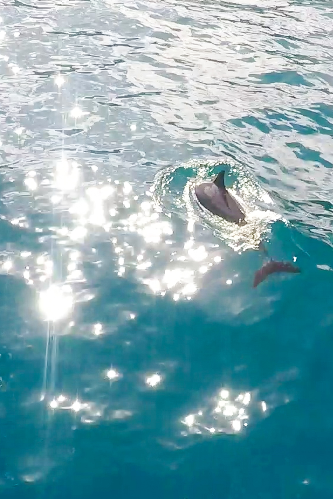 Best Boat Tours in Hawaii | Never Settle Travel