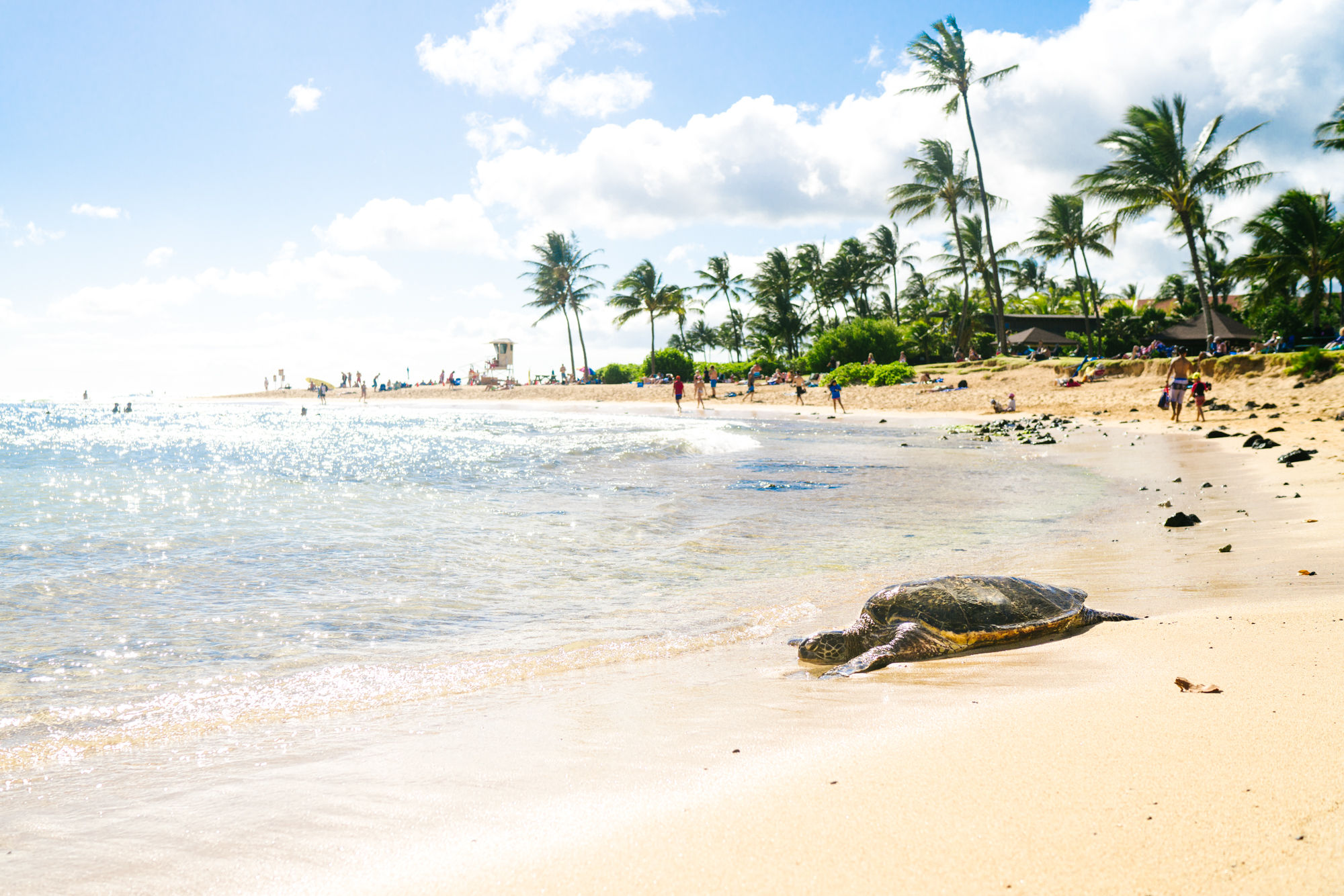 This beach in Kauai has the best snorkeling | Never Settle Travel