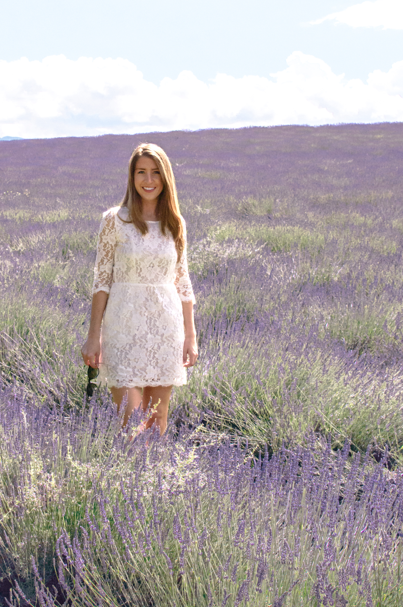 Provence Lavender Fields Travel Guide