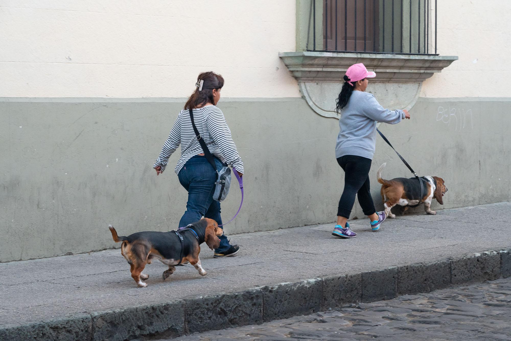 Bassets, Oaxaca