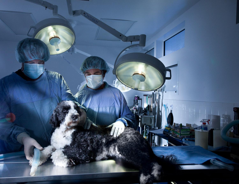 dog in vets office.jpg