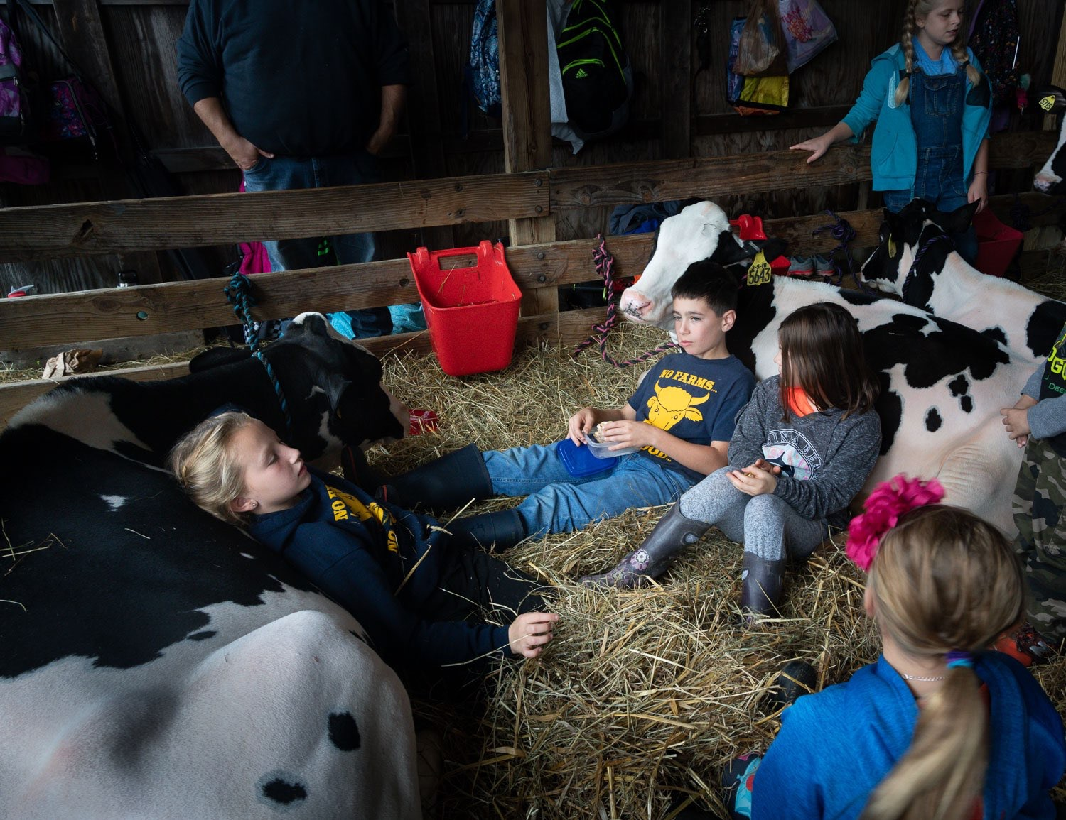 Young tees resting during the Ag Fair competition in Pine Plains. johnstuartstudio-compress.jpg