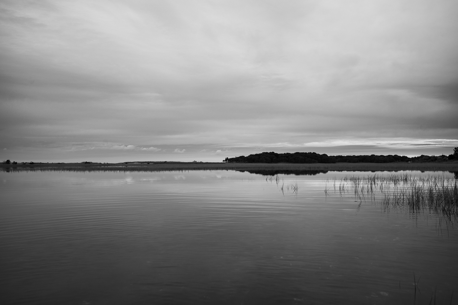 Black and white image of a Secluded Wetland in Southampton, NY.jpg