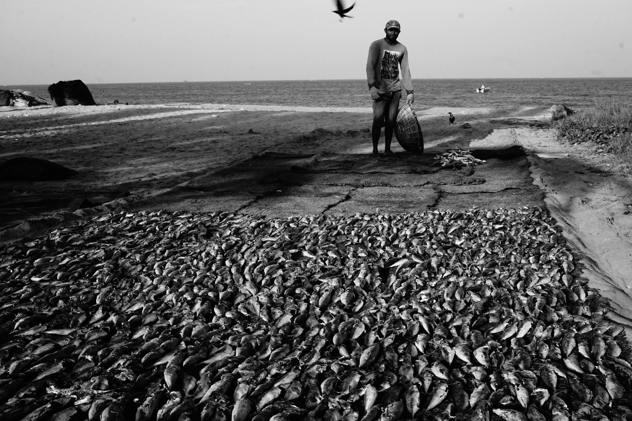 Negombo, Sri Lanka (2016)