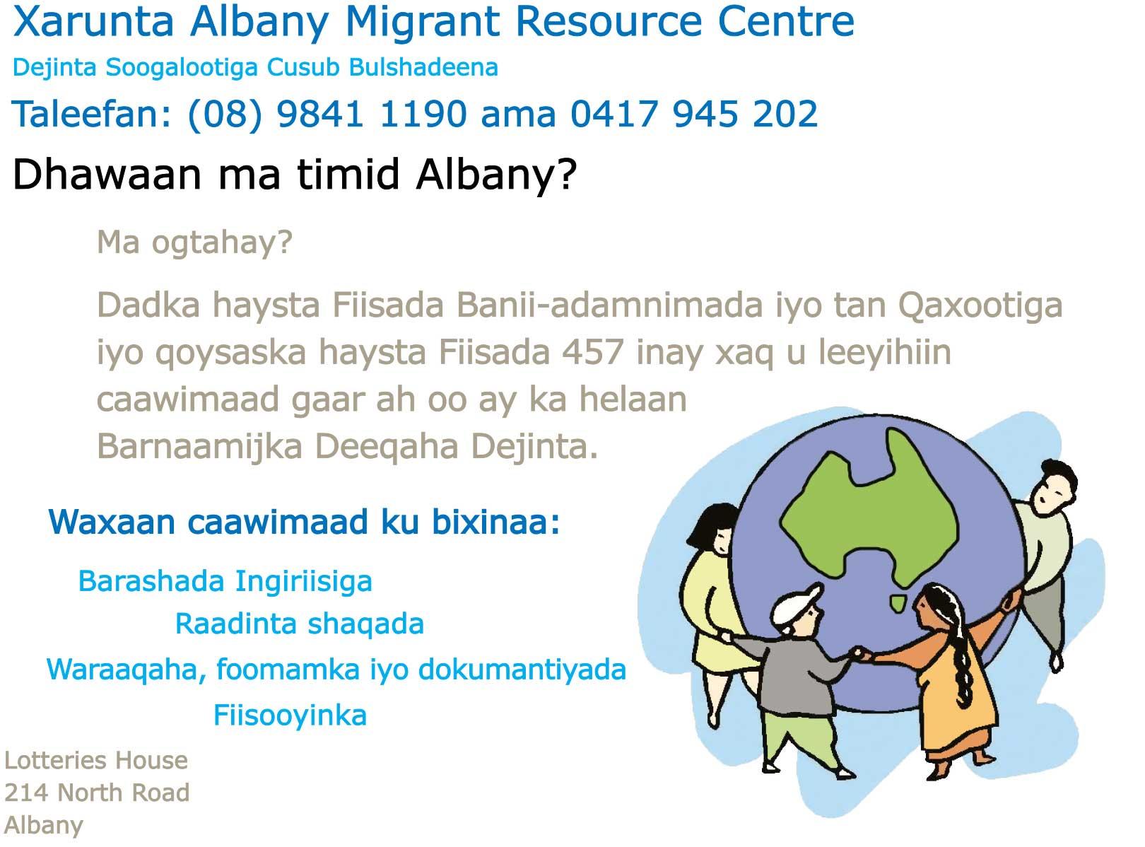 Somali - Albany - back