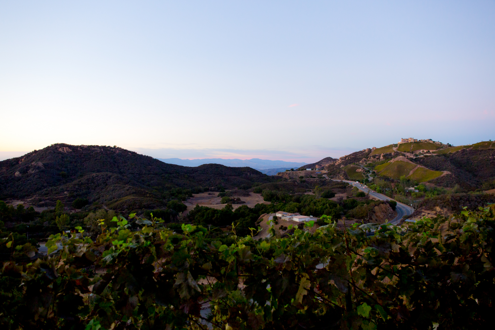 029_CarlyGaebe_SteadfastStudio_WeddingPhotography_Malibu_LosAngeles_LA_California_Winery_Hilltop_CieloFarms_Vineyard.jpg