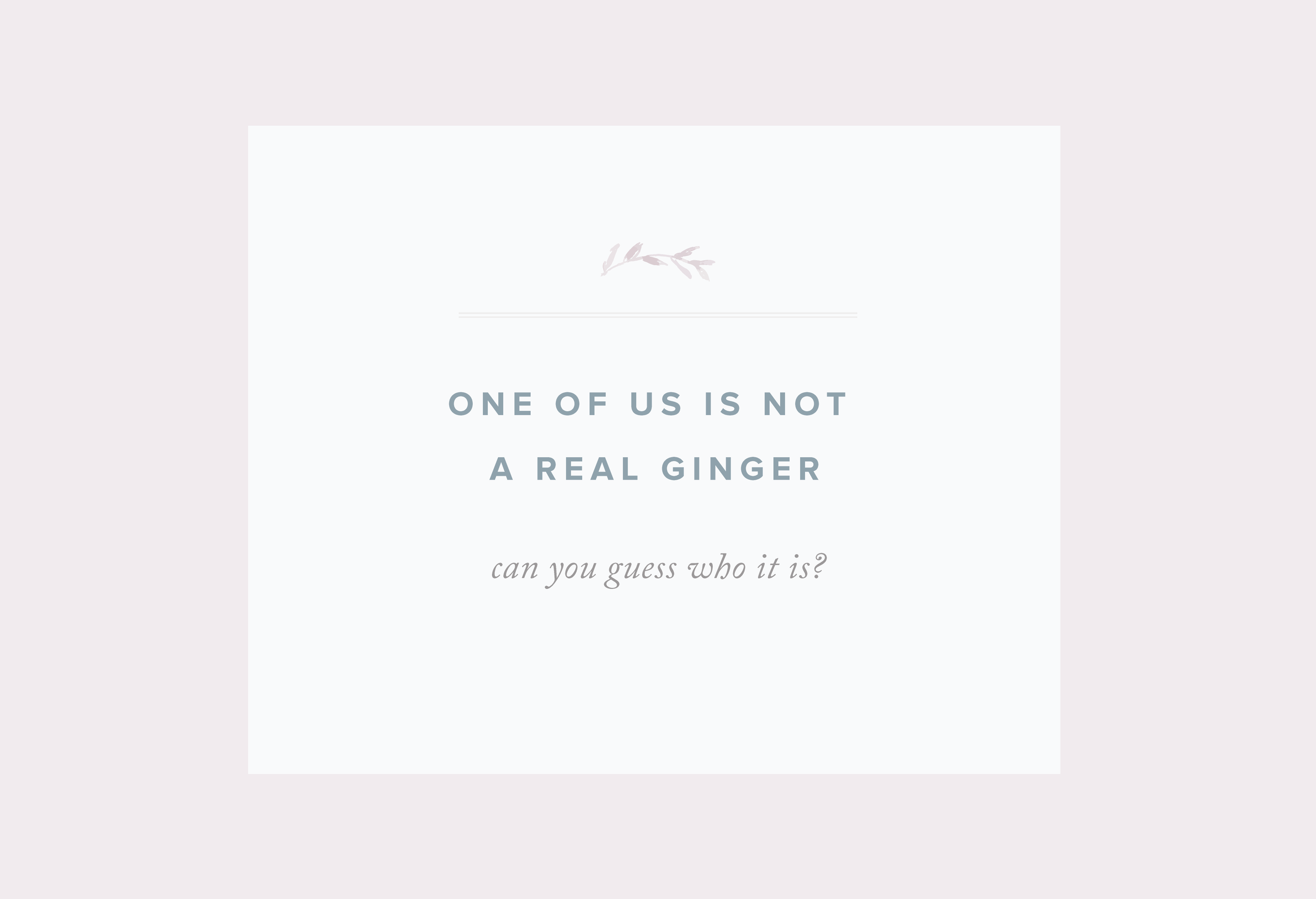meet-the-gingers-01.png