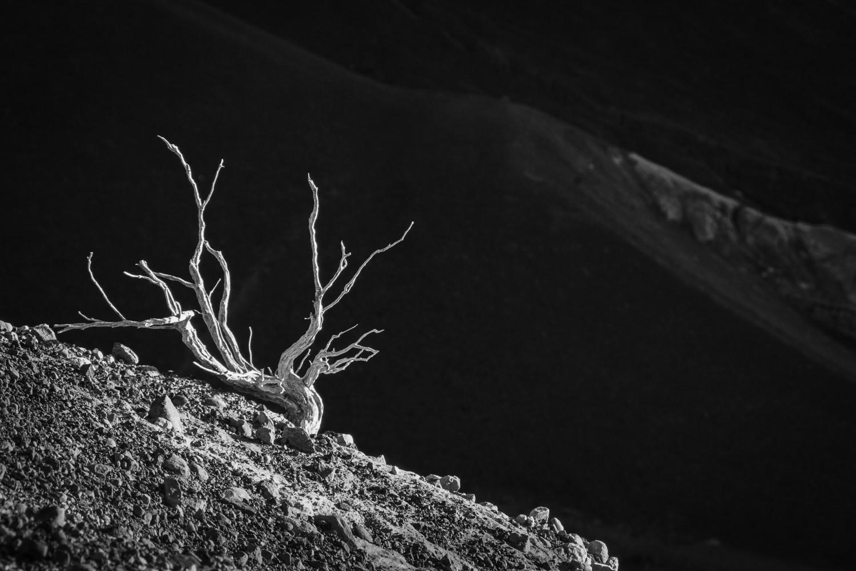 ©2019 Lana Turner - Visionary Death Valley - Feb 2019
