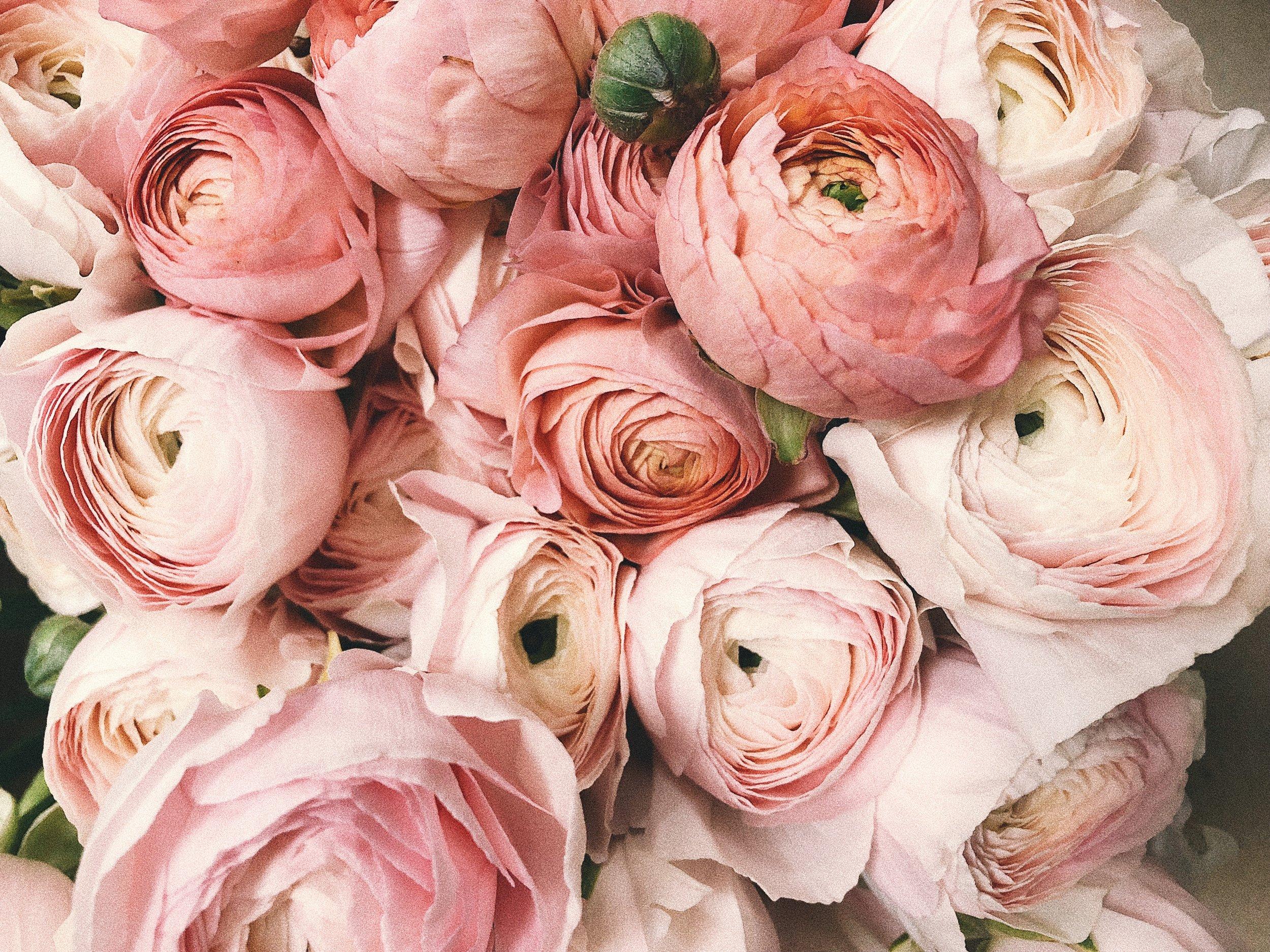 anniversary-beautiful-blooming-931177.jpg