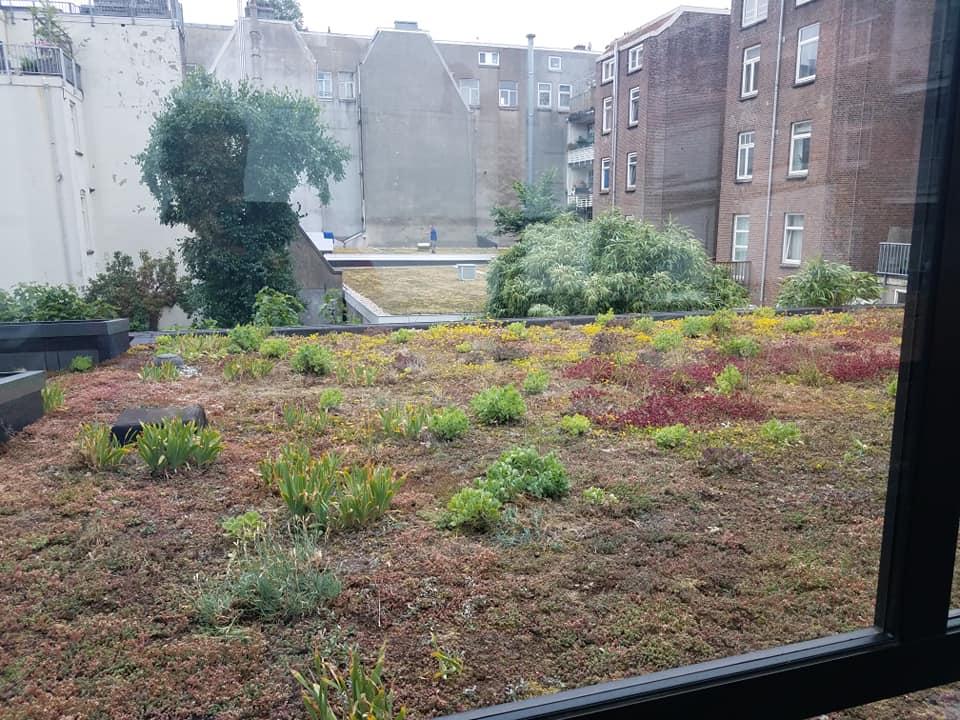 Hotel Roof Habitat 3.jpg