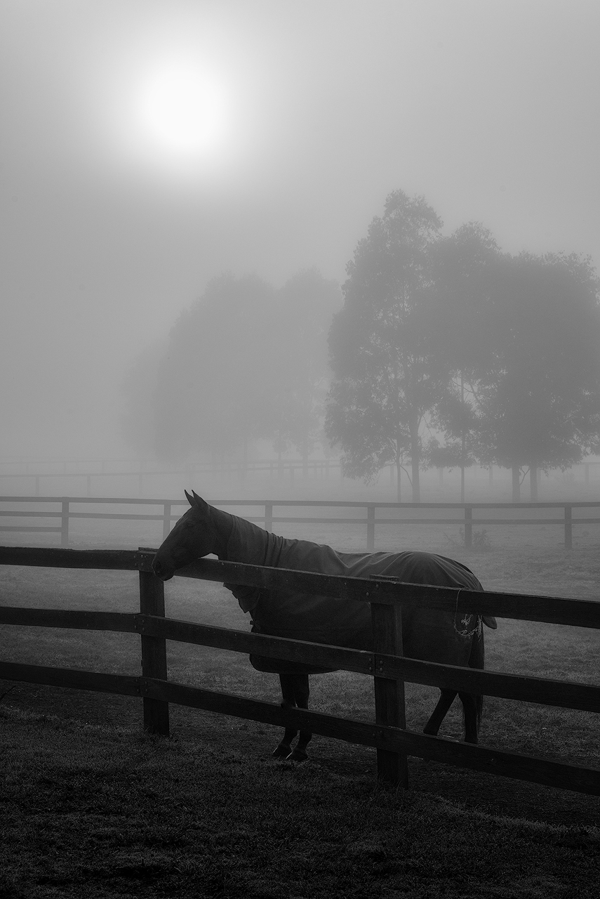 Equine in Black and White