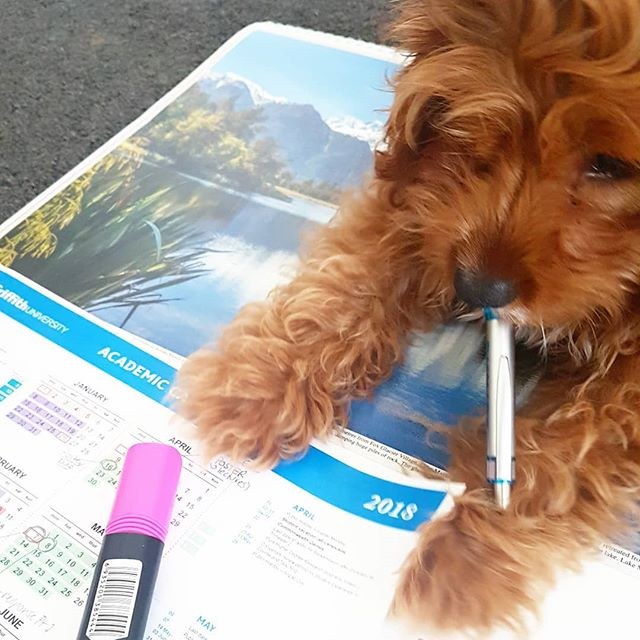 Planning the week with my trusty assistant who likes stationery as much as I do 🐶👌✏