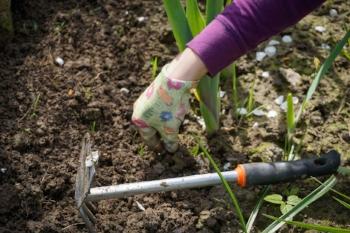 work-in-the-garden-2432111_1280.jpg