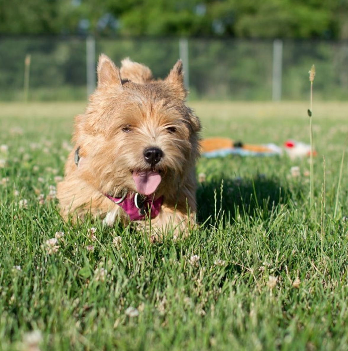 A photo of my favorite dog running through a field