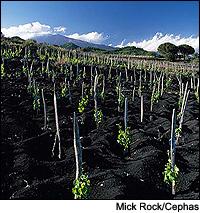 TH_Sicily060208_200.jpg