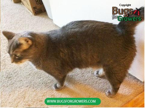 Photo 2. Cat as a host of fleas