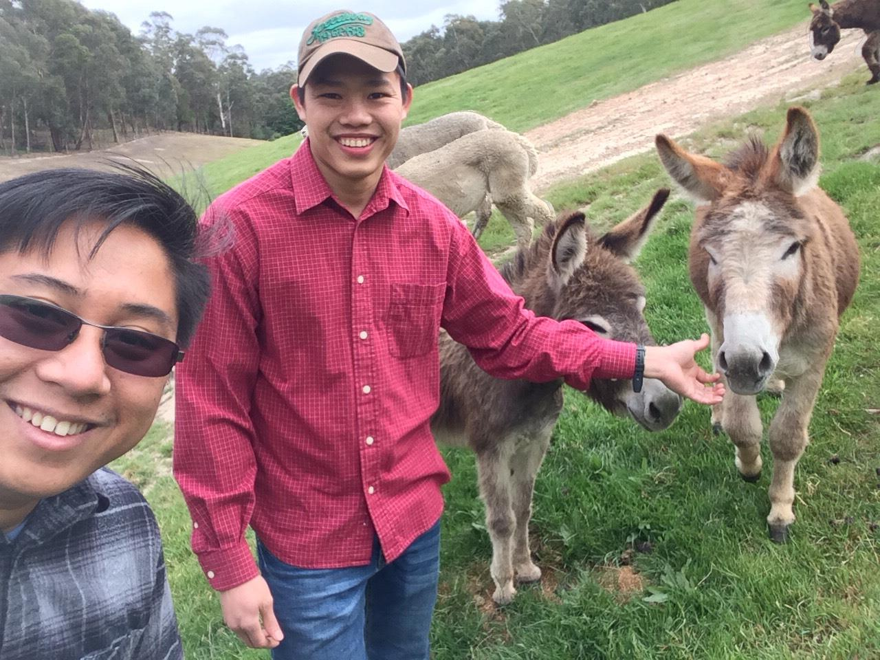Don n Cay n donkeys.jpg