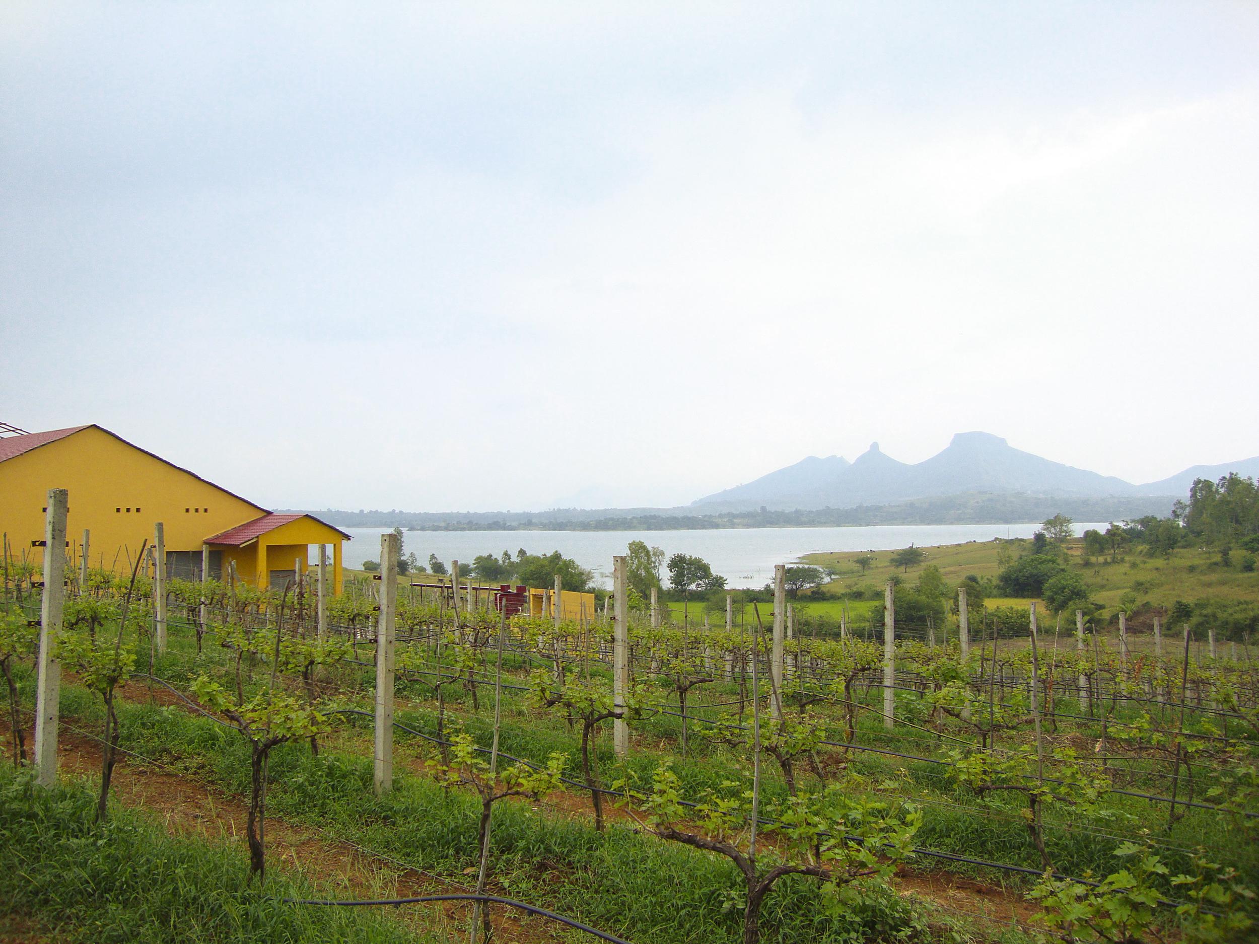 vineyards-2.jpg