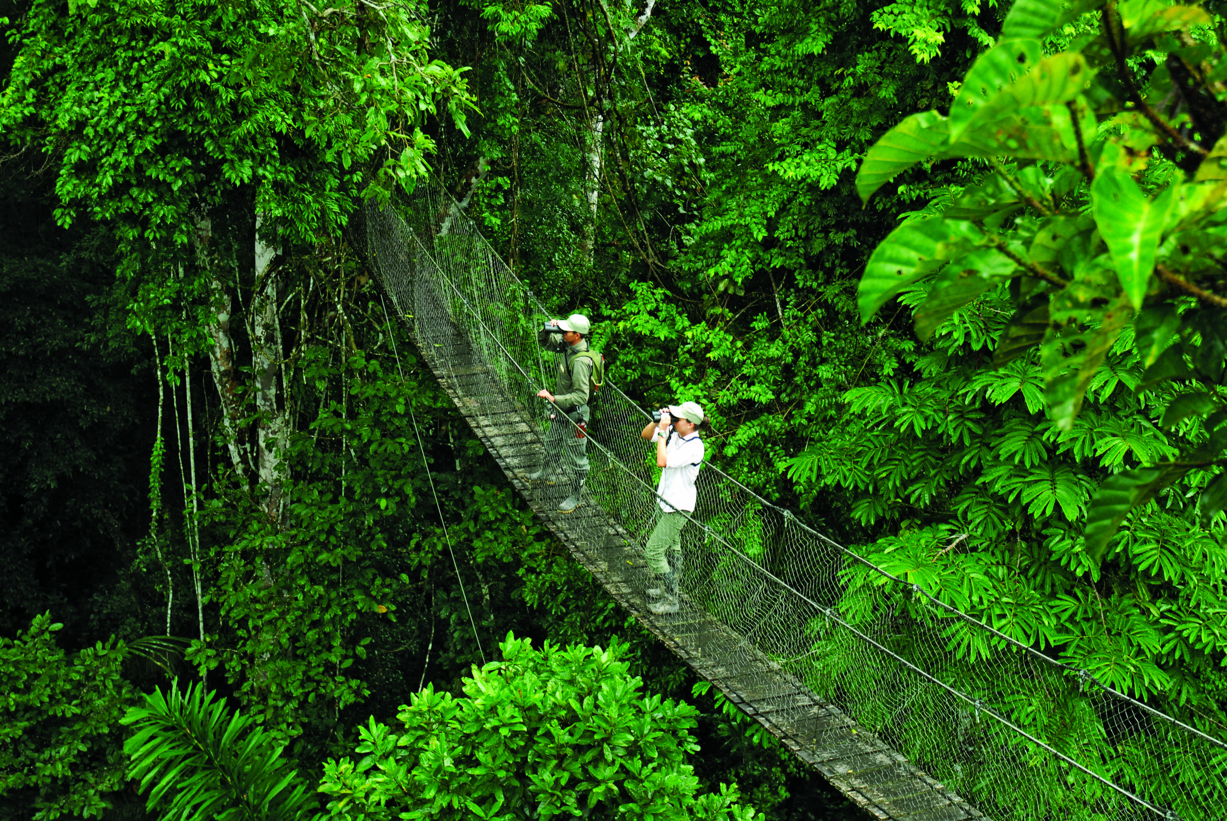 Reserva Amazonica's Canopy Walkway takes guests 100' above the rainforest floor