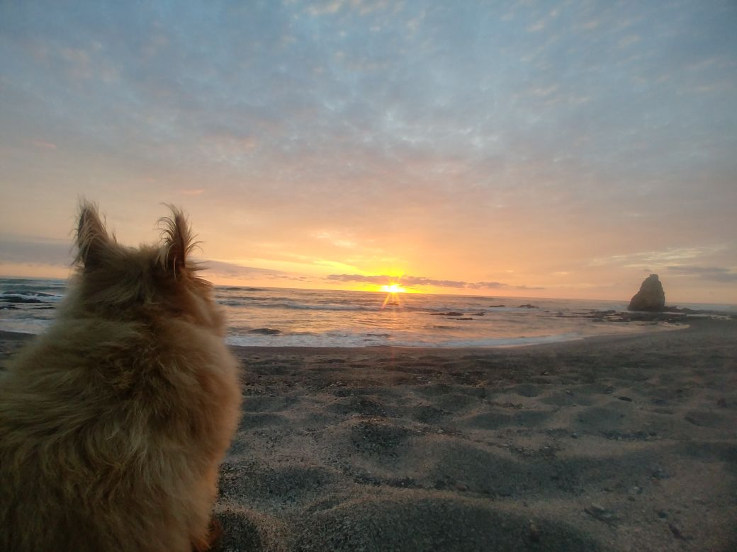 Tika, one of Jennifer's dogs that accompany her to work, enjoys the sunset on the beach right in front of Latitude 10.