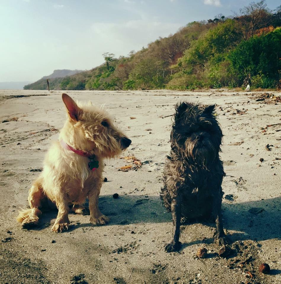 Happy perros de la playa!