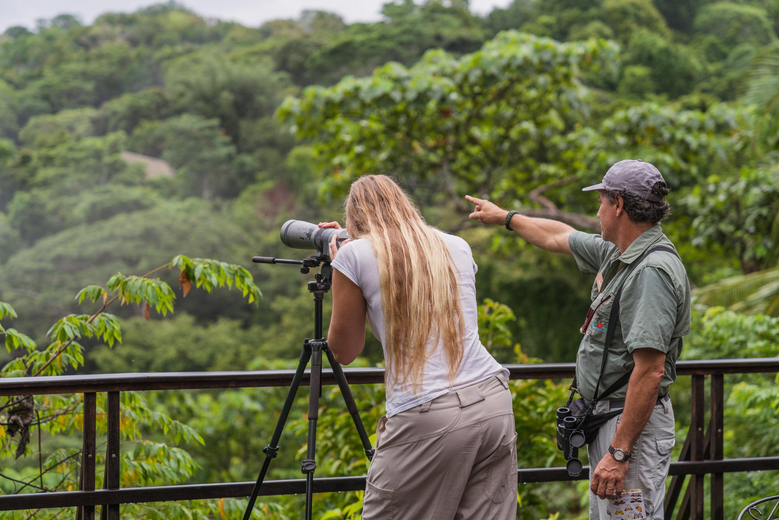 Birdwatching from Brisa Azul terrace.jpg