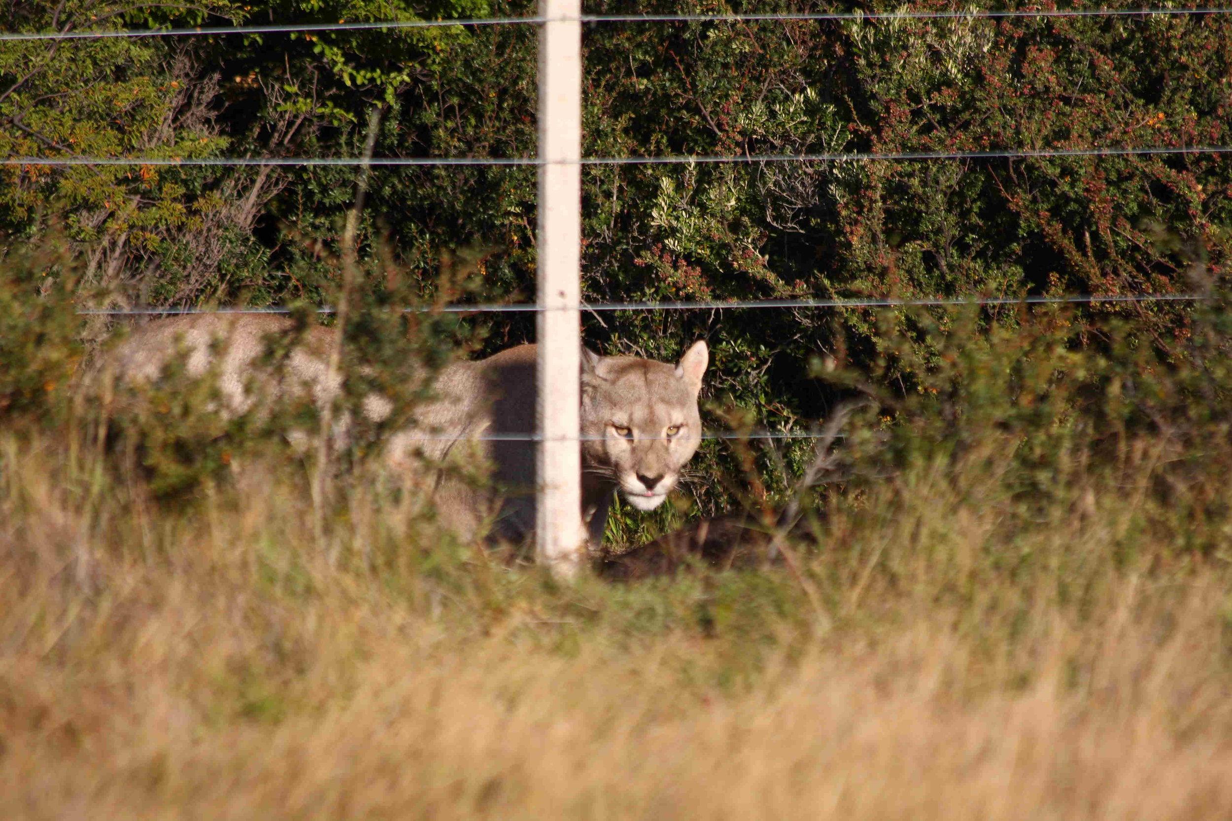 Wildlife (19).jpg