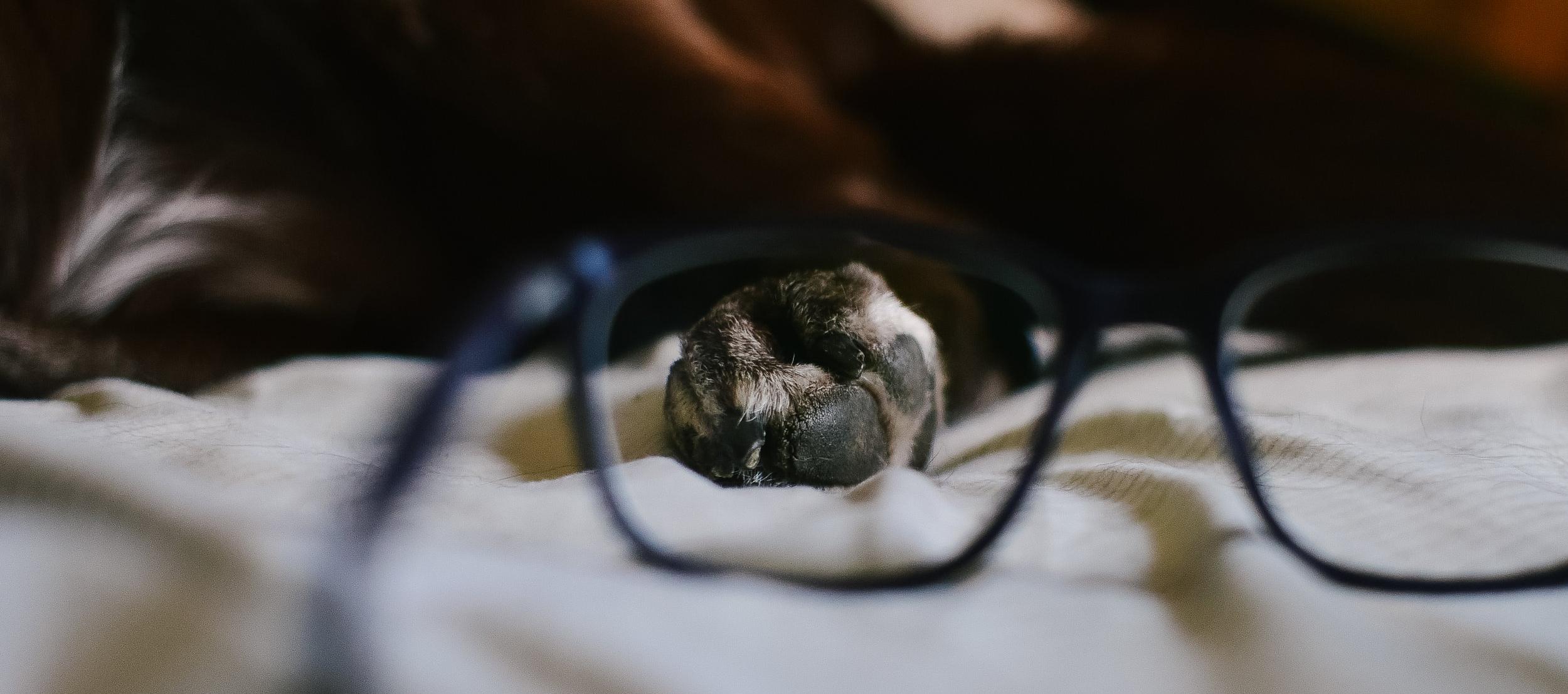 wisconsin-pet-photographer.jpg