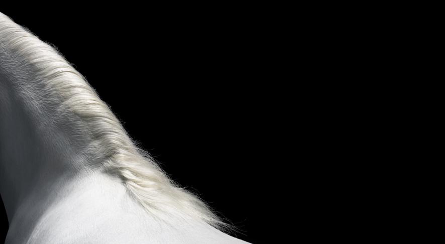 Welsh Mountain Pony 060(LR).jpg