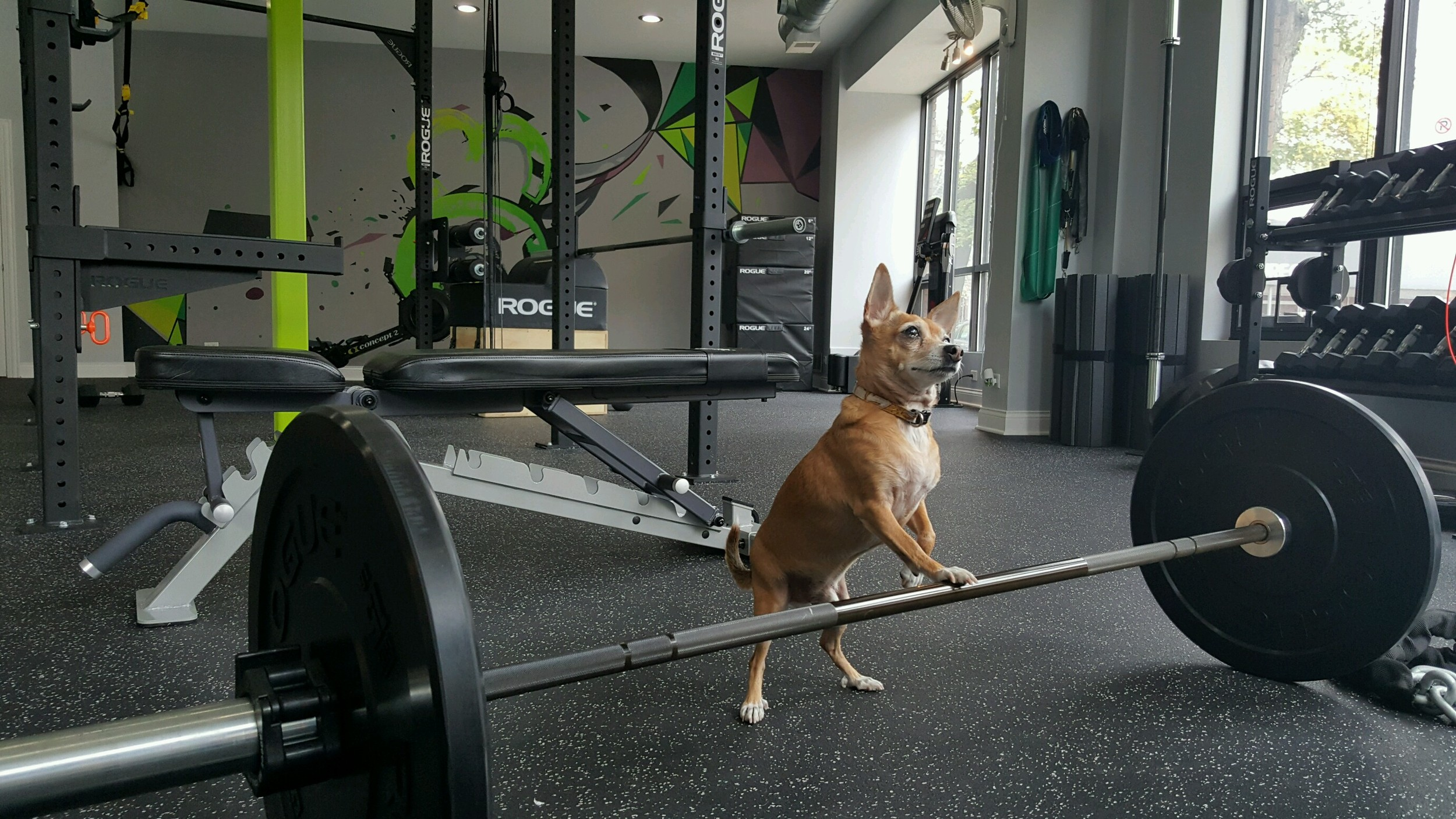 The Diet Doc Difference- Dog Friendly Gym