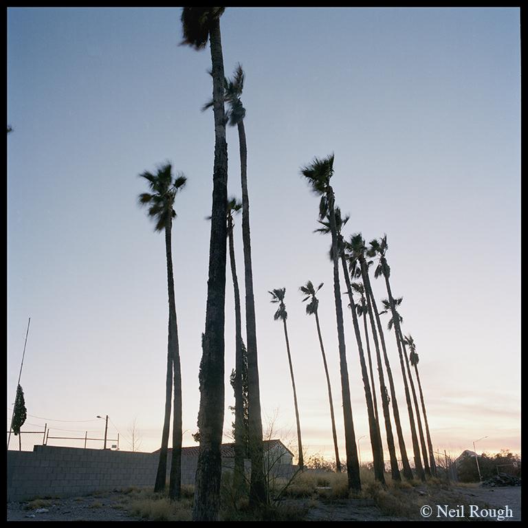 01. AZ Tucson Trees.jpg